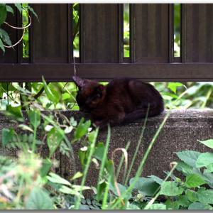 わっ!庭に仔猫ちゃんがきた!