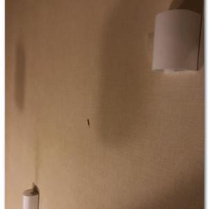 階段の壁に子ヤモリが