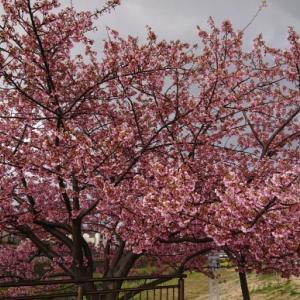 春はデトックスの季節:何を出して空になる?