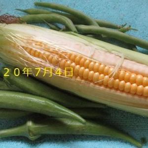 今年も夏野菜が 豊作・・・??