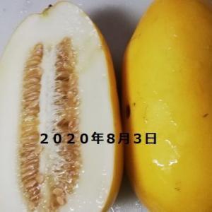 8月3日 黄瓜を試食
