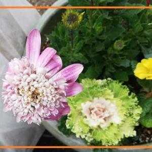 今日の花 野菜 多肉植物 カンボジアの写真・・・