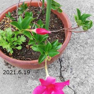 花の時間 6月19日 その2