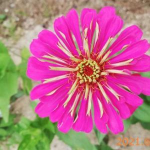 6月23日朝の花