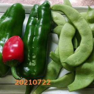 7月22日 花と野菜の時間