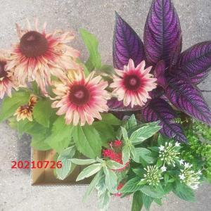 購入した花とミニトマト
