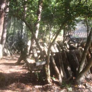 シイタケ榾木お越し