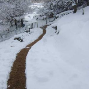 アプローチの雪掻き