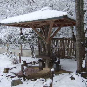 タヌキの庭園の今年の雪は?