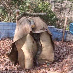 原木シイタケの植菌作業