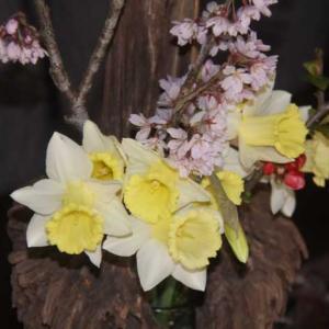 サクラの花を見ながら野菜つくり