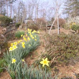色づき始めたタヌキの庭