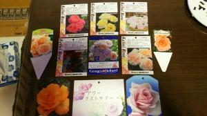 今年購入したバラ達🌹