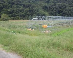 野菜圃場は、秋の復旧作業・草刈り大作戦、完了です!!