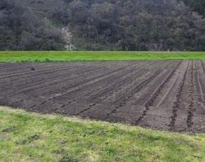 野菜圃場の白ネギは、秋ネギ区画の定植作業完了!!