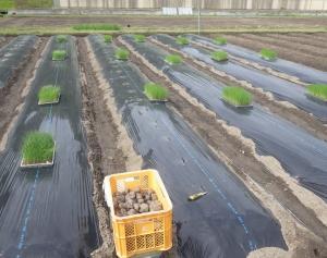 果樹園にもどる前の、野菜圃場のあれこれまとめて第一弾!! 無事遂行です!!(゚O゚;
