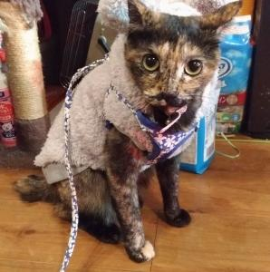 深夜散歩猫、サビー。〜思わず、キグルミを着ていました〜