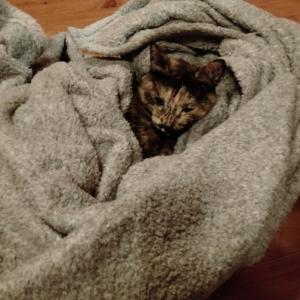 保護猫サビーは、3才になりました。