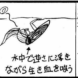 マツモムシの孵化