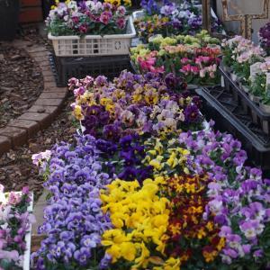お花を沢山仕入れました。レッスンのキャンセル出ました。
