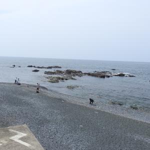 【特別記事】新スコア「知名度」を導入してみた(照ヶ崎海岸&江の島)
