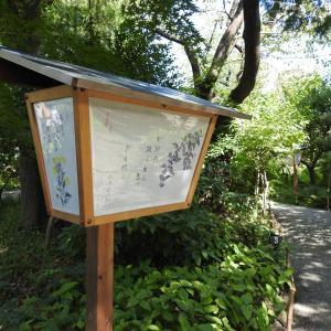 【特別記事】1時間の制限付き昆虫探索記(向島百花園の場合)