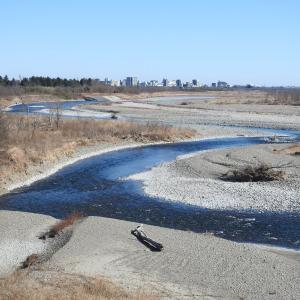 ほぼ凍った池の畔で(荒川大麻生公園)