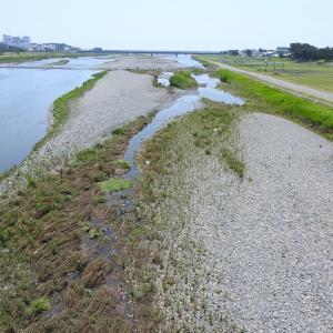 これが曇り空だと感動も50%カット(酒匂川河口域&照ヶ崎海岸)
