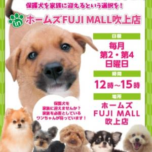 明日28日(日)は保護犬譲渡会inホームズFUJIMALL吹上店です。