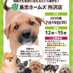 19日(日)保護犬譲渡会 in 島忠ホームズ所沢店