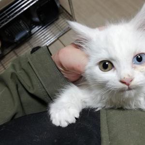 虐殺現場で保護した姉妹猫はかわい子ちゃんでした。