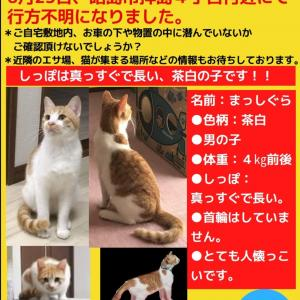 迷い猫 情報提供のお願い(東京都昭島市)