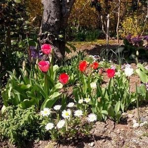 庭が楽しくなってきた