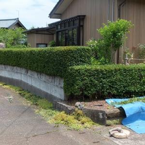 生垣の刈り込み