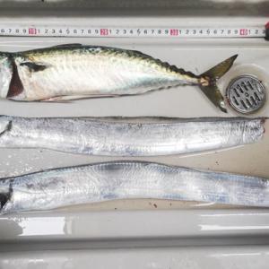 うみかぜ公園と八景島前でのタチウオ釣りの様子と釣果