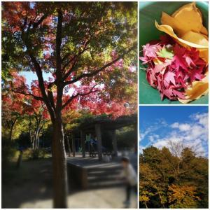 秋の備忘録♡紅葉狩り♡