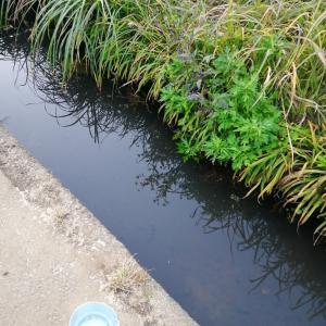 池と川釣り♡息子憧れのアクアテラリウム♡
