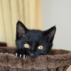 今さらですが・・・黒猫・聖(しょう)君が家族に増えました