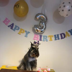 リッキー☆3歳お誕生日おめでとう(^O^☆♪