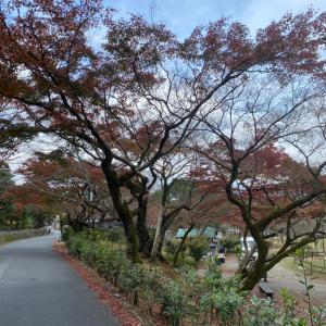 恒例の京都へお墓参り、いつも違う?
