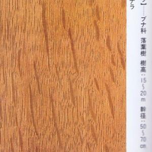 小楢(こなら)・・・ブナ科国産広葉樹