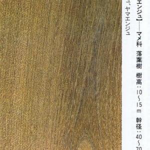 犬槐(いぬえんじゅ)・・マメ科の落葉樹