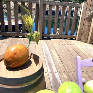 ディズニーシーでココナッツ‼︎