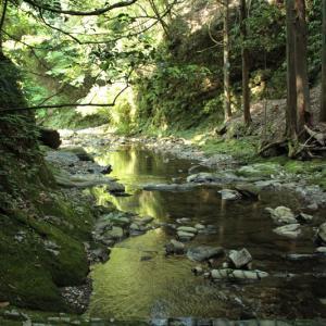 初夏、深山の沢筋探索でヒメフタバラン斑入り2タイプ(2016.5.23)