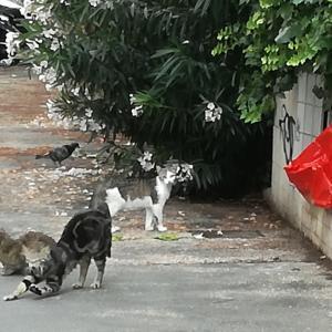 昨日の公園への散歩とのら猫と飼い猫