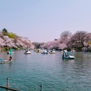 井の頭公園の桜2018