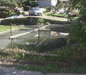 金魚池の網の張替え