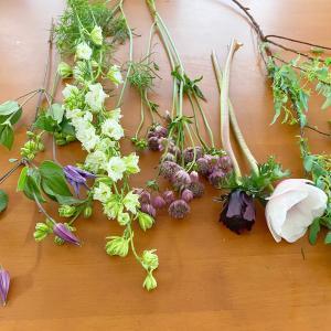 今の季節の花たち