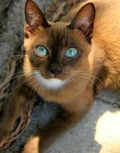 猫  あいみょん