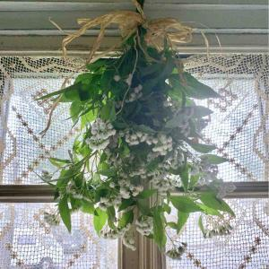台風状況と庭の花*
